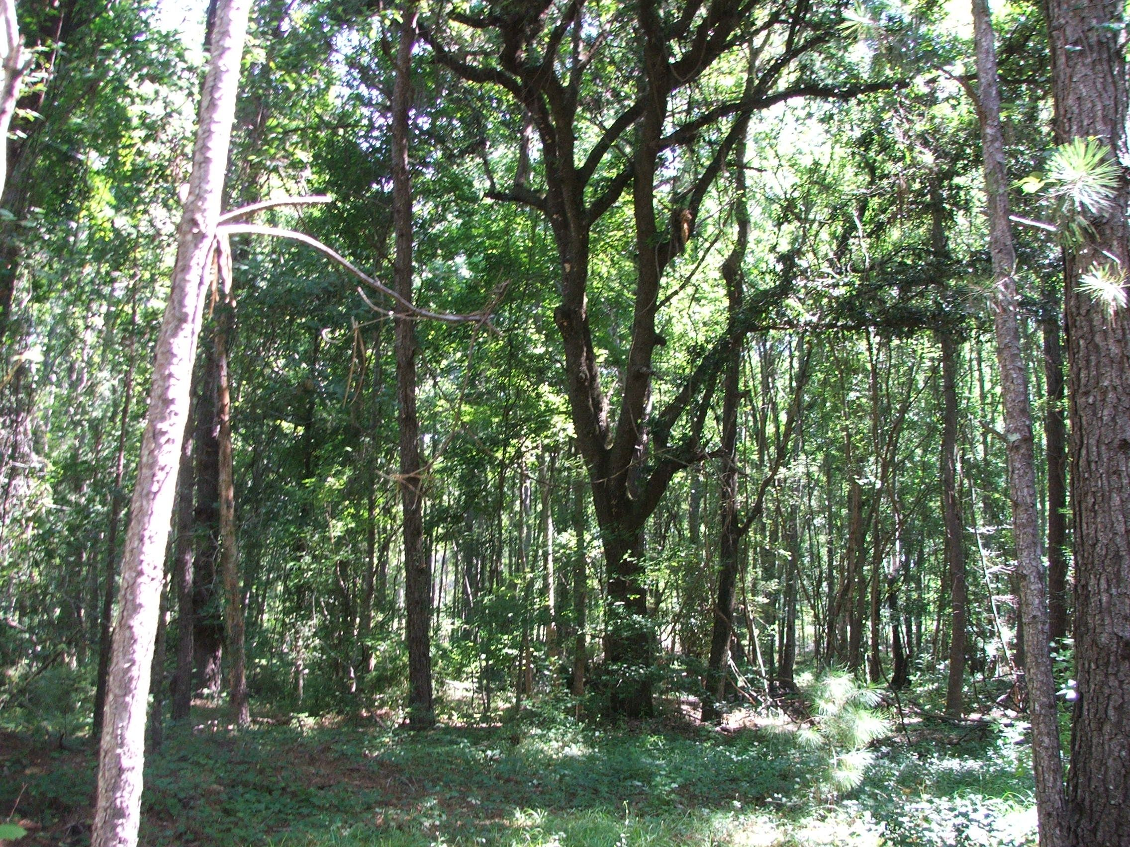 Evans County GA - 26 Acres +/- Green Hill Land and Timber, LLC