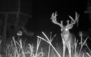 The Ghost Buck at supplement Feeder