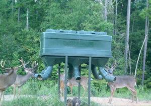Trophy Bucks at Supplement Feeder