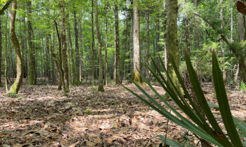 Land For Sale in Allendale County