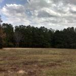 Dickson 471 Grass Field