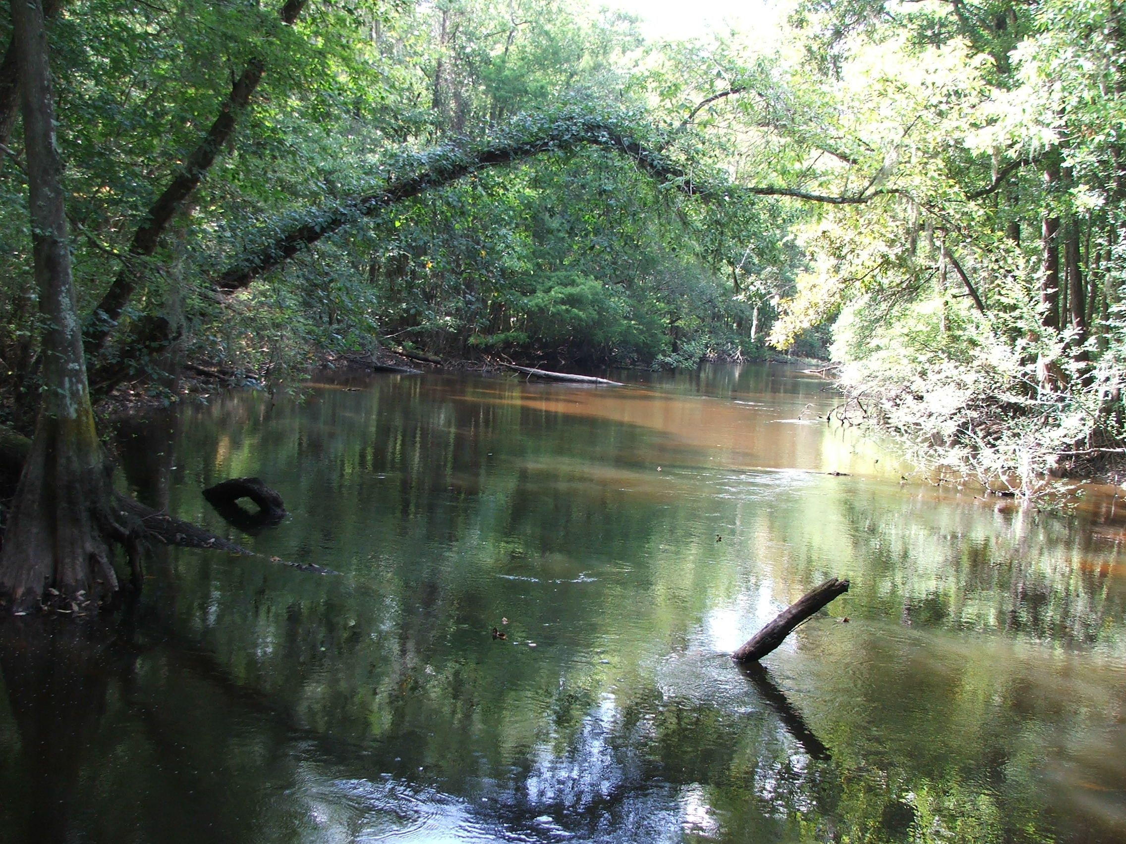 Early Rise Ranch - Edisto River 2