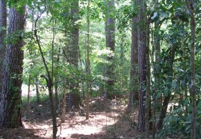 Active - Green Hill Land and Timber, LLC