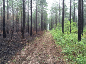 Prescribed Control Burn Vs No Burn
