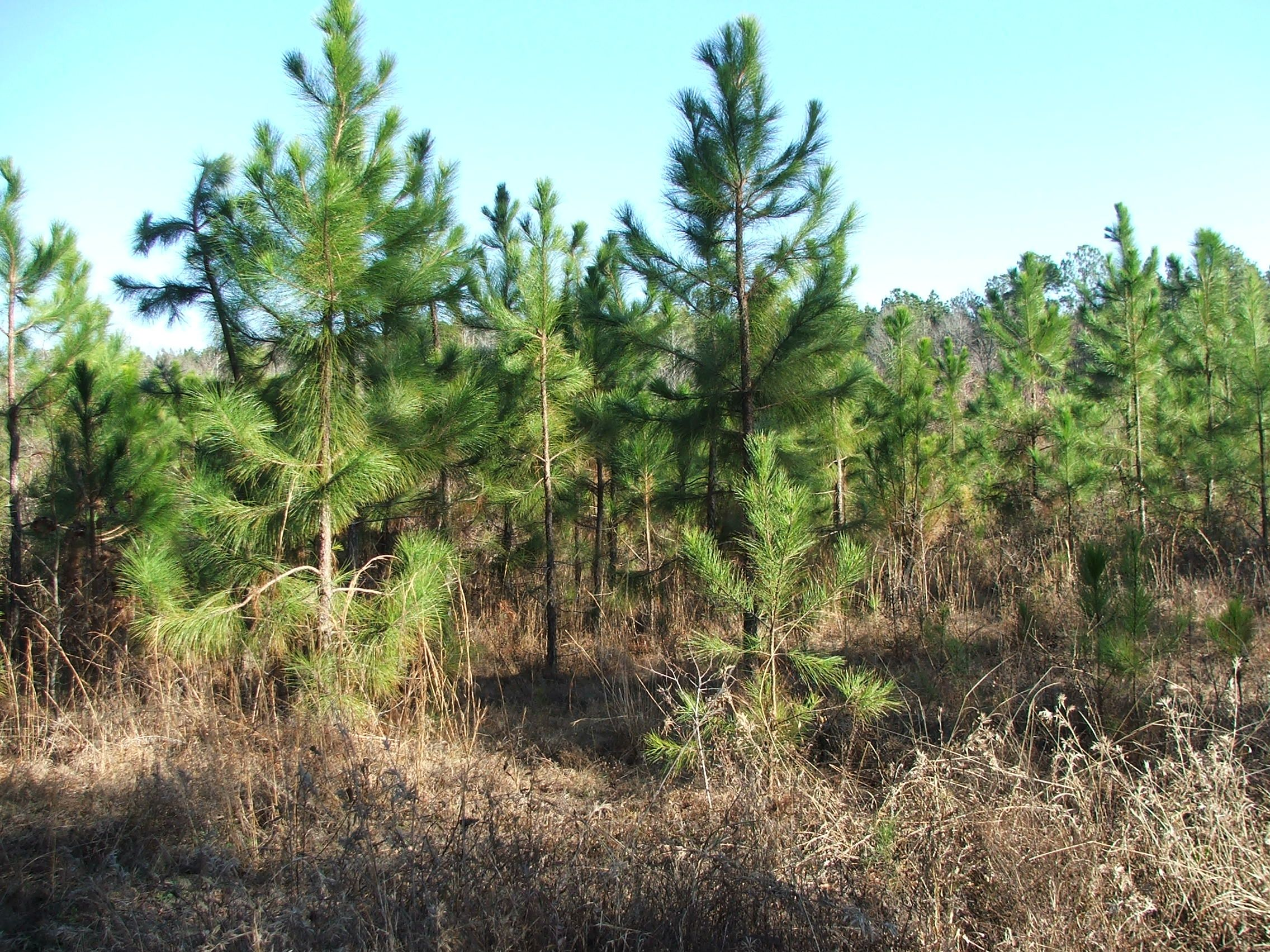Screven County Ga 40 74 Acres Green Hill Land And