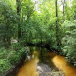 Sycamore Farm - Creek Frontage