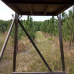 Sycamore Farm - Tower Stand in Longleaf Pines