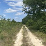 Taylor County Land For Sale