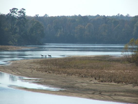 Twin Rivers Preserve Altamaha River Deer Crossing River