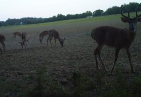 Summer Scouting for Big Bucks