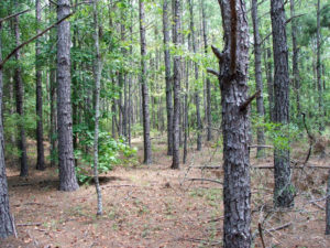Timber at Camp Creek Retreat in Burke County, Georgia