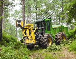 A feller buncher at work in a southern forest