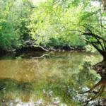 Creek at Ivey Springs Plantation