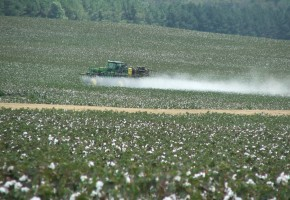 sprayingcotton