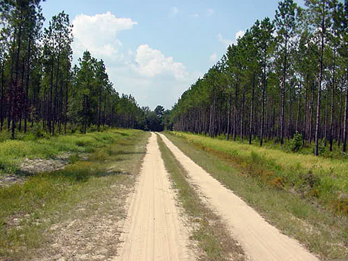 Triple Wing Plantation Road